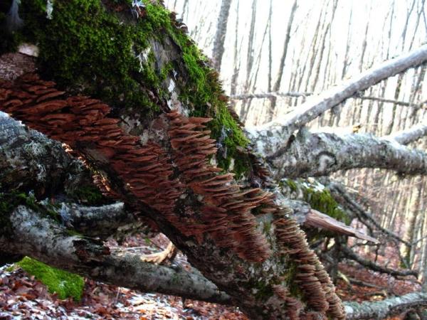 Карадагский лес - Чатырдаг
