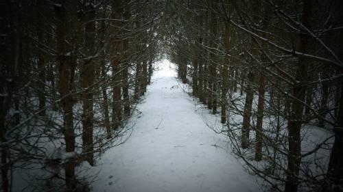 лес азимут